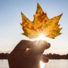 Festivalul recoltei: Oamenii de știință finlandezi urmează să extragă pigmenți naturali din frunzele de toamnă